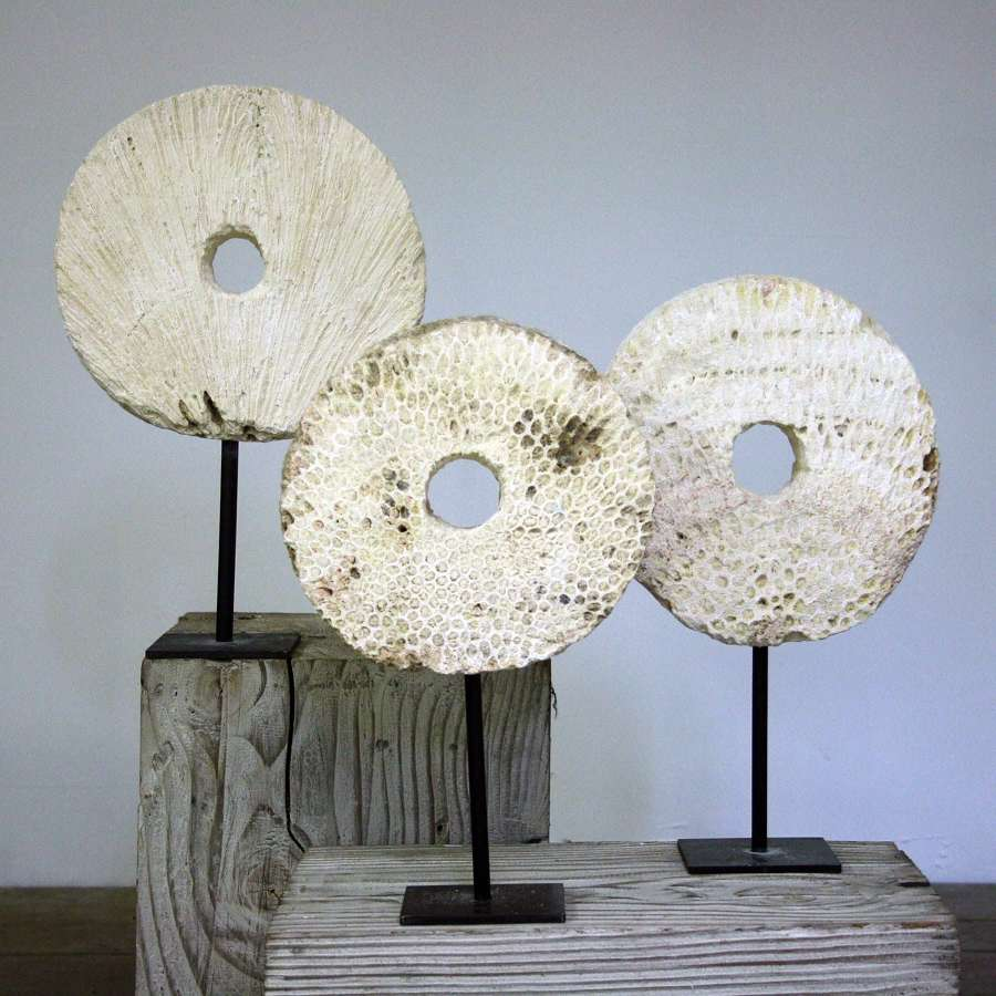 Fossilised Coral Rings on Stands