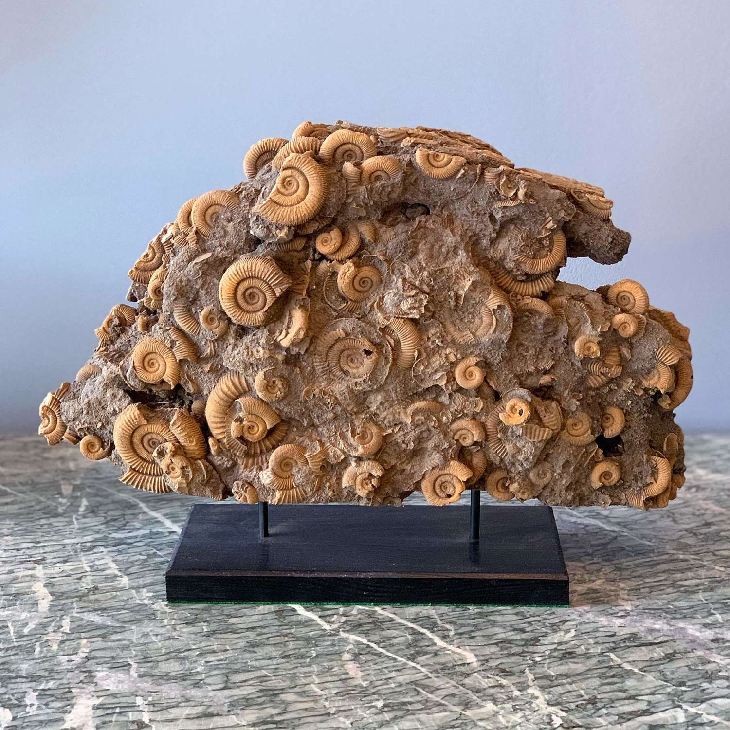 Large and rare cluster of Ammonites on a modern stand